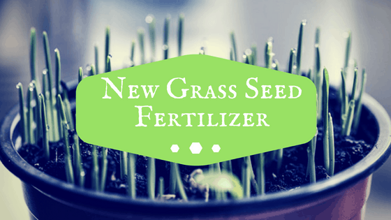 Fertilizer To Use On New Grass Seed