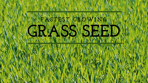 Fastest Growing Grass Seed