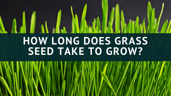 How Long Does Grass Seed Take to Grow? | Peak Yard