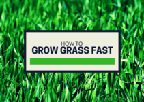How to grow grass fast