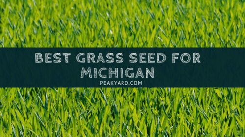 Best Grass Seed Michigan