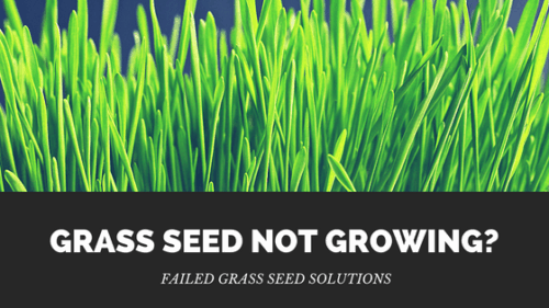 Grass Seed Not Growing? – Reasons Your Seed Failed