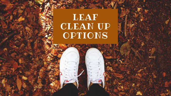 Ways to clean up leaves