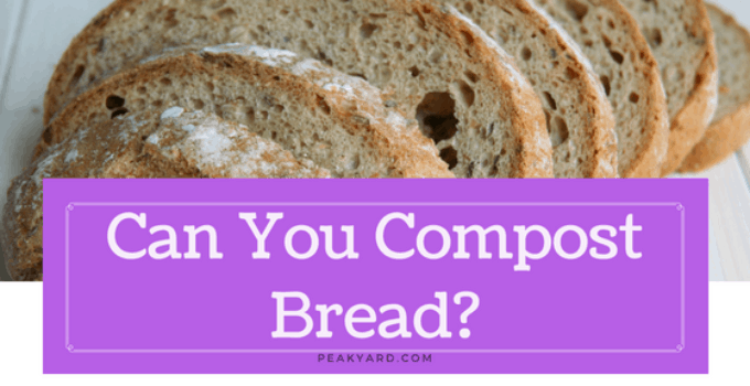 can you compost bread