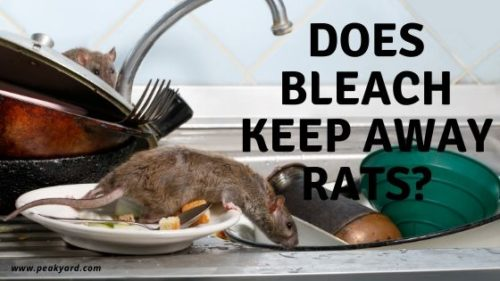 Deter Rats with Bleach