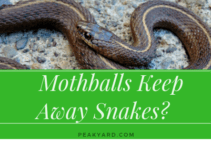 Mothballs keep away snakes?