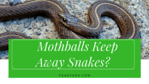 Do Mothballs Keep Snakes Away?