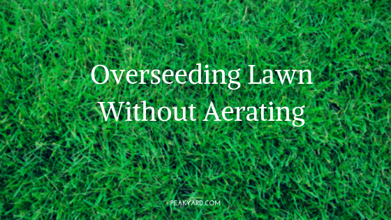 Overseed grass without aerating