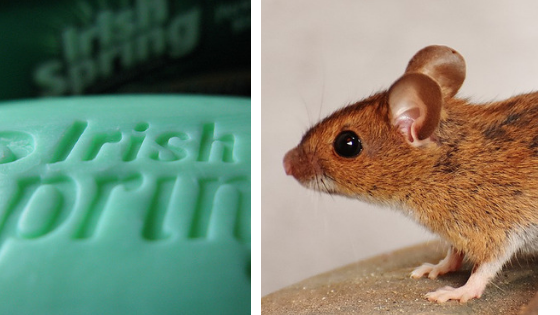 Does Irish Spring Soap Keep Mice Away? | Peak Yard
