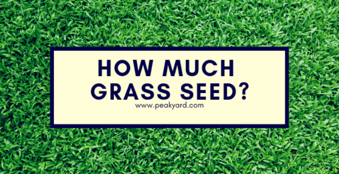 How Much Grass Seed Do You Need