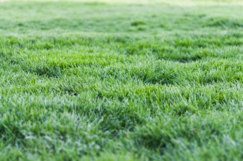 Lawn Renovation: 12 Steps To Success