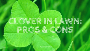 Is Clover In The Lawn Good Or Bad?