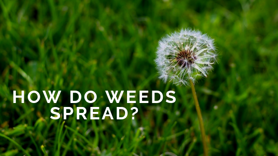 Prevent Weeds From Spreading