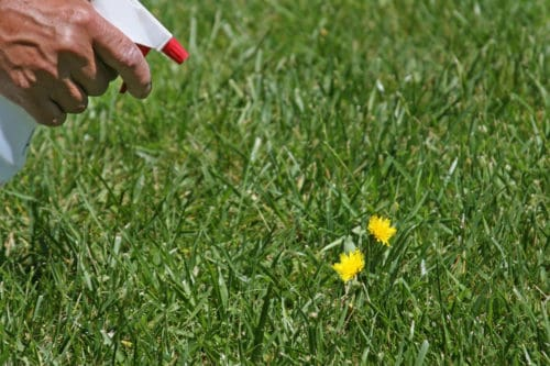 When To Apply Weed Killer To A Lawn?